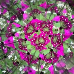 Vue de fleurs à l'intérieur du kaléidoscope Huckleberry