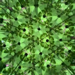Vue d'un trèfle à l'intérieur du kaléidoscope Huckleberry