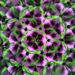 Vue d'une fleur violette à l'intérieur du kaléidoscope Huckleberry
