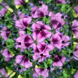 Autre vue de fleurs violettes à l'intérieur du kaléidoscope Huckleberry