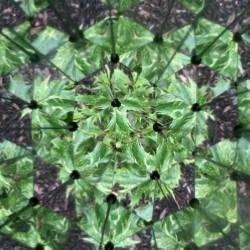 Vue de salade à l'intérieur du kaléidoscope Huckleberry