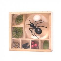 Boite loupe à insectes Huckleberry