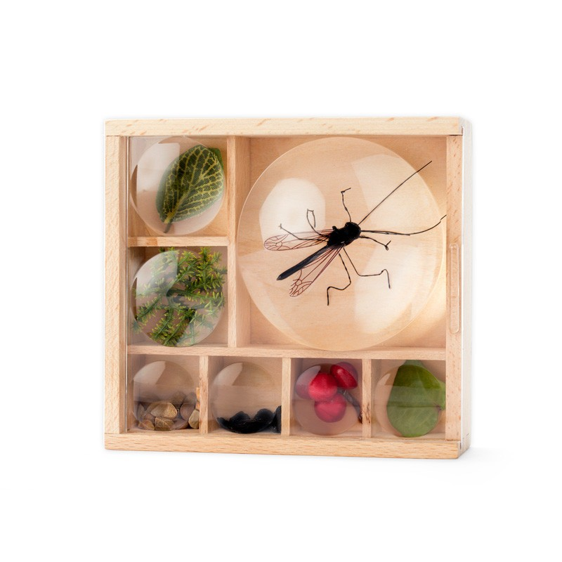 Boite loupe pour collectionner les insectes Huckleberry