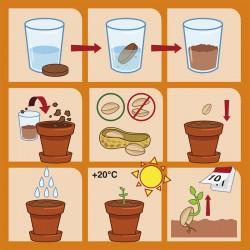 Cacahuètes à faire pousser - Radis et Capucine notice