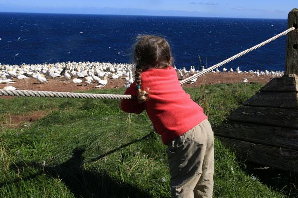 Voyage-au-Quebec-en-famille-ile-de-bonaventure