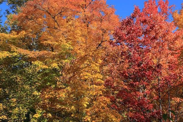 Vacances automne en famille