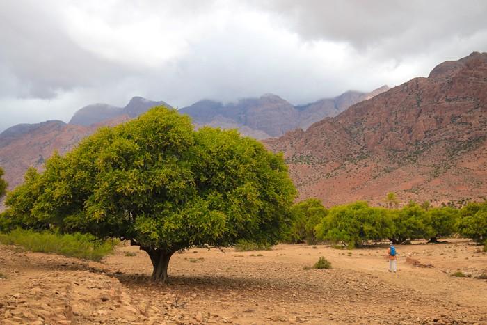 Voyage-famille-Maroc-anti-Atlas-Arganier
