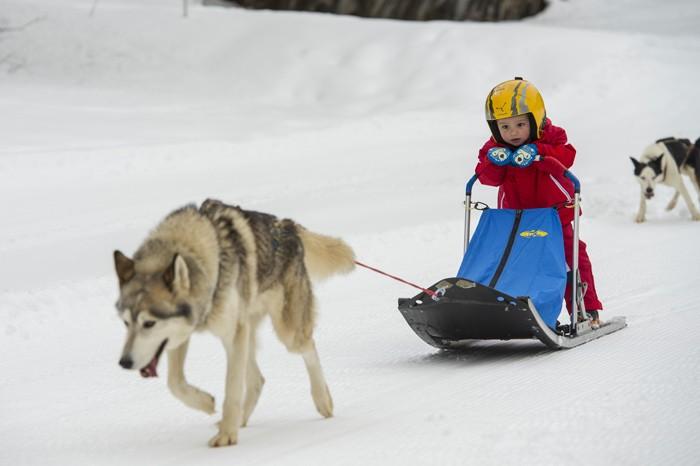 chien de traineau pour enfant à Parlognan