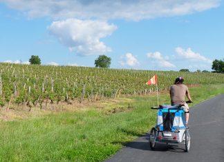 à velo en famille avec la carriole à travers les vignes en Bourgogne