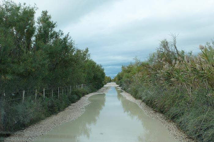 une grosse flaque d'eau sur le chemin en Camargue