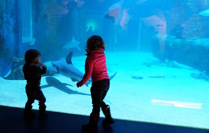 Erin et Cian devant les requins et raies à l'aquarium