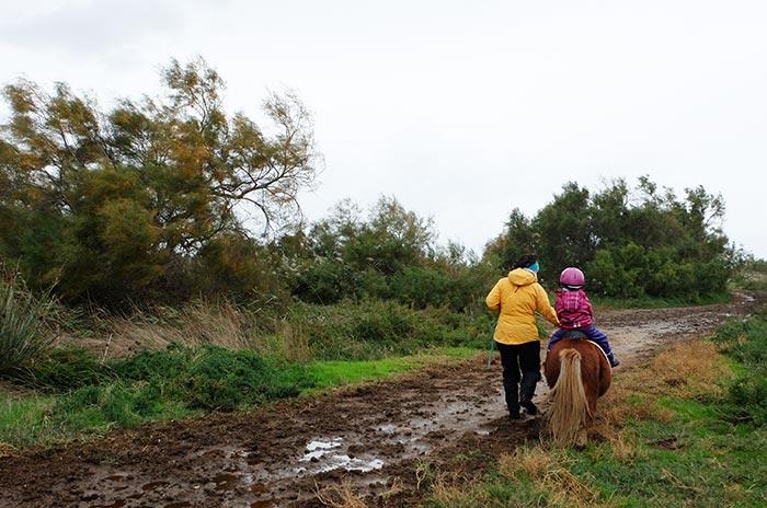 balade en poney en famille en Camargue