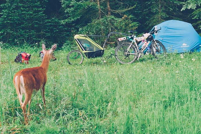 biche devant le bivouac avec les vélos
