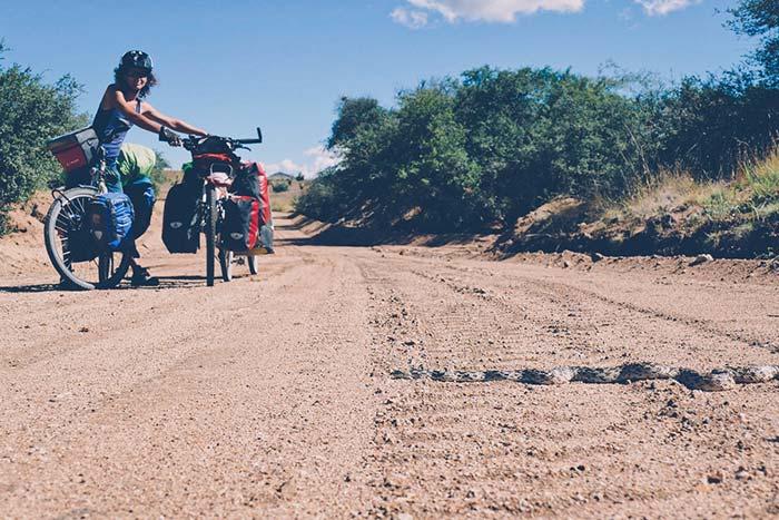 serpent sur la piste lors du voyage à vélo en famille