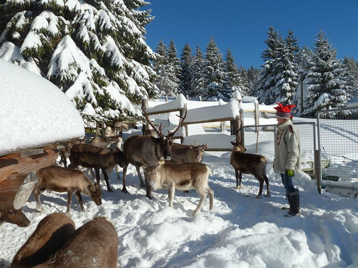 l'élevage de rennes de la station du Tanet