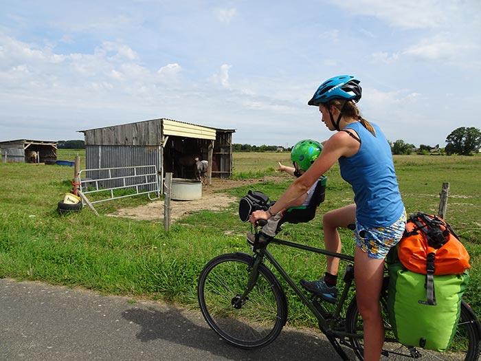 cheval au bord de la voie vélo