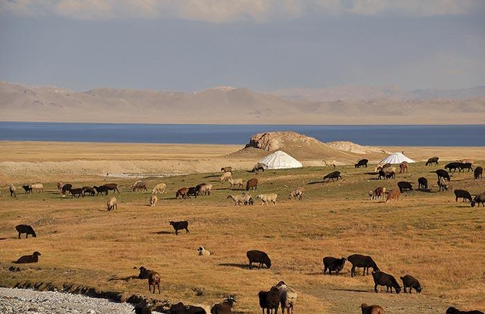 paysage au Kirghizstan : moutons, lac et yourte