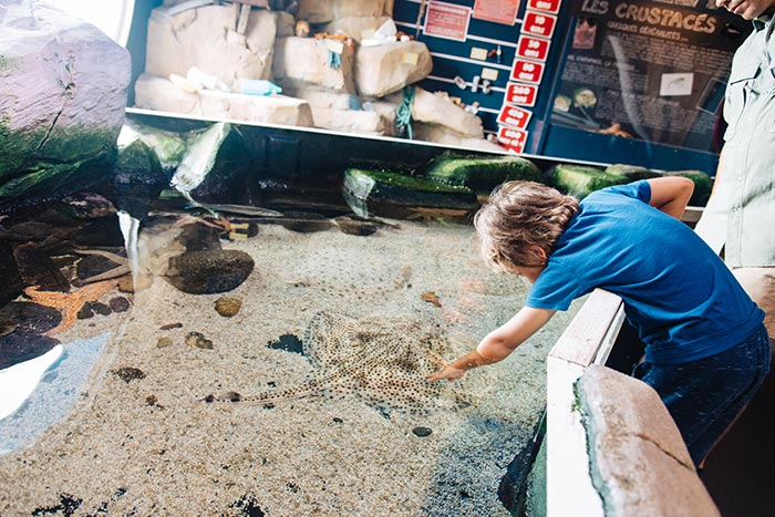 enfant joue avec un poisson à l'aquarium aquashow d'audierne