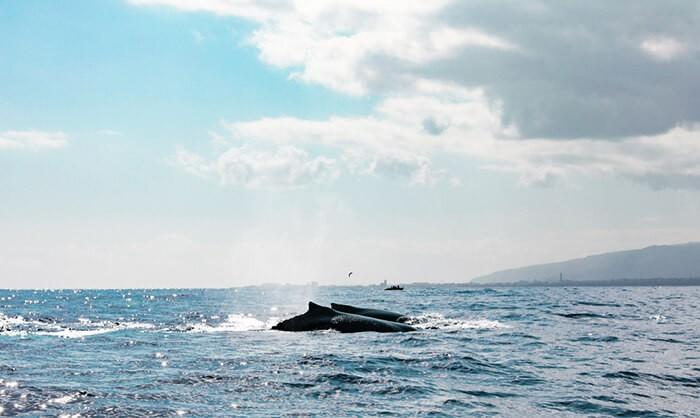 baleines au large de l'ïle de la Réunion