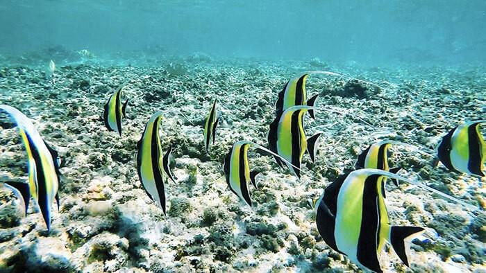 banc de poisson lors d'une session snorkeling à la Réunion