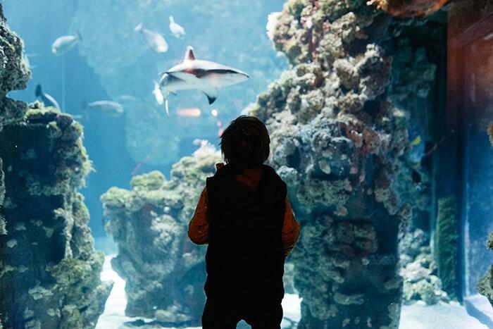 enfant qui regarde un requin dans l'aquarium du musée océanographique de Monaco