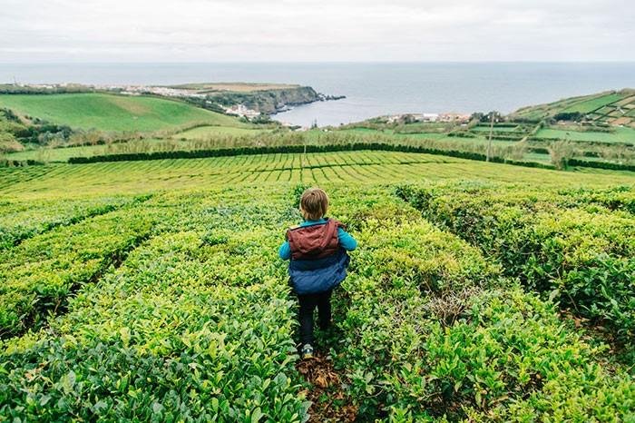 enfant se promène dans les plantations de thé de l'île de Sao Miguel, Açores