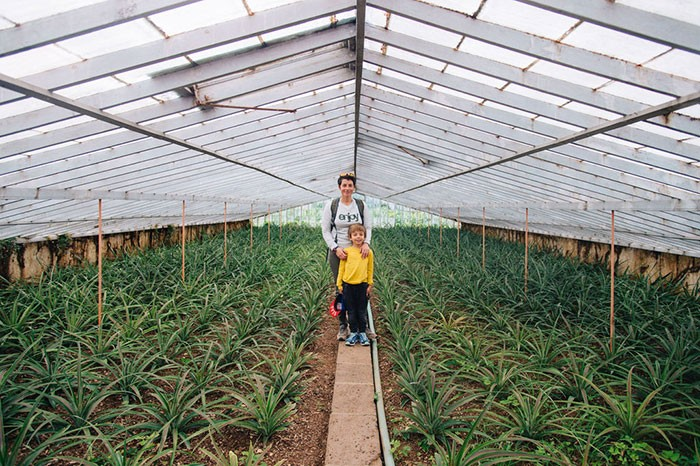 maman et son enfant dans une serre de plantation d'ananas d'Arruda à Sao Miguel aux Açores