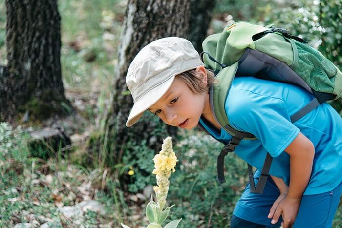 petit garçon en randonnée dans l'estérel et fleur jaune sur le chemin