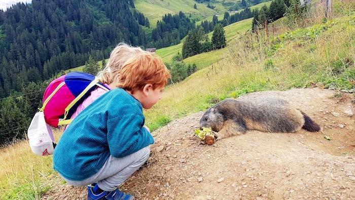 Photo enfant et marmotte dents du midi suisse