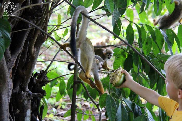 Enfant donnant à manger aux singes en Guyane