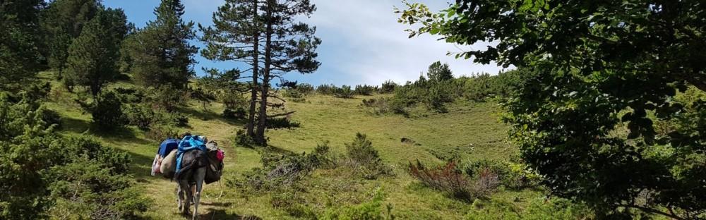 Randonnée avec un âne en famille : 6 jours d'itinérance en Ariège