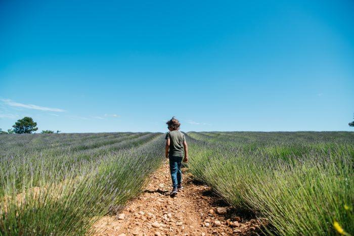 enfant marchant dans champ de lavande