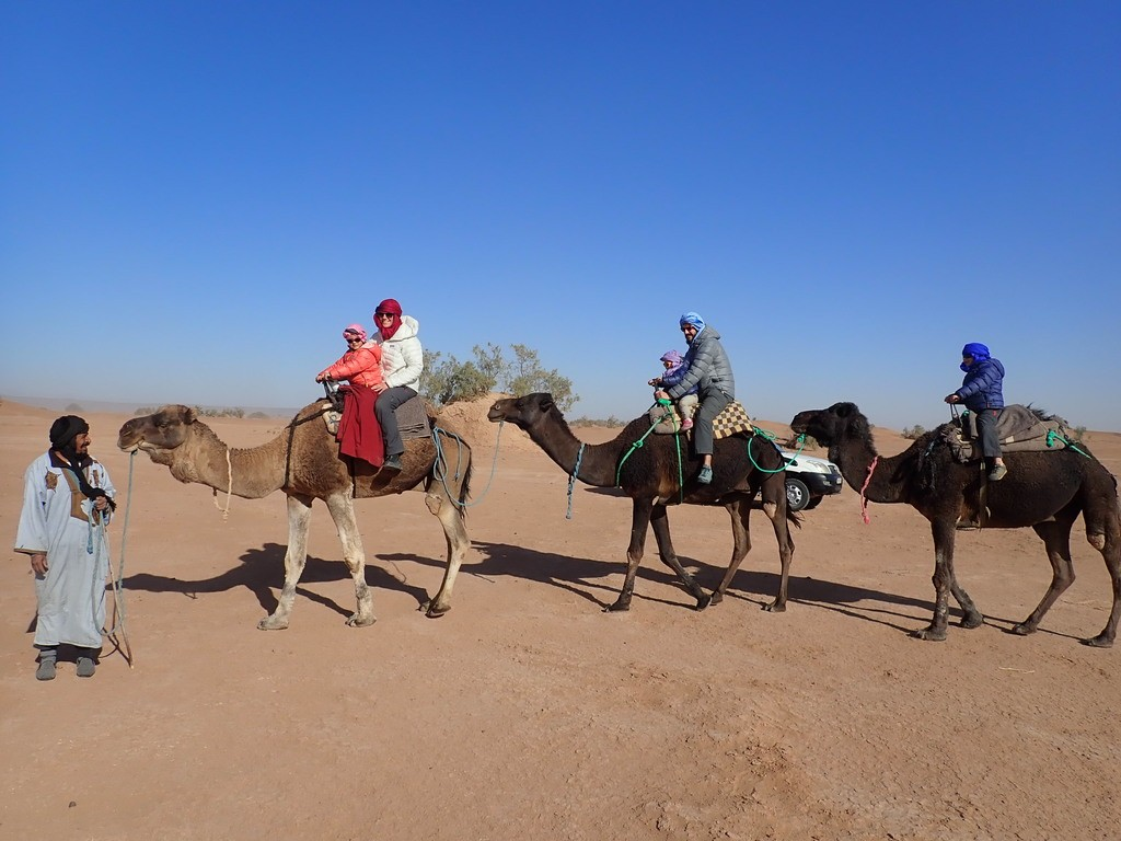Alors, chameaux ou dromadaires ?