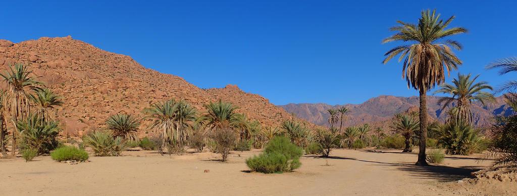 La forêt de cèdres, Maroc en famille