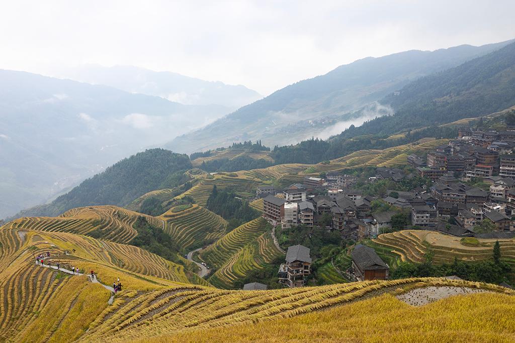 rizières en terrasse de Longsheng