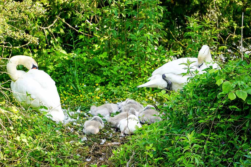veloroute-vallee-somme-famille-nid-de-cygne