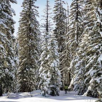 Arriverez-vous à trouver l'enfant 🧒 qui se cache sur cette photo 🔍 ?   Ces arbres enneigés 🌲 sont tout simplement fascinants, vous ne trouvez pas ? Nous, ça nous émerveille toujours, chaque année, comme si nous avions le même âge que nos oursons... 🤩  Merci à @arthur_et_thibaut de partager leurs moments nature en famille ❤️  👉 Vous aussi partagez vos moments nature, de voyage ou de microaventures en famille, avec le hashtag #barouderenfamille !  #lessaisies #savoiemontblanc #outdoorkids #family #snow #alpsmountains #alps #alpes #outdoorfamily #montagne #mountainlovers #petitsbaroudeurs