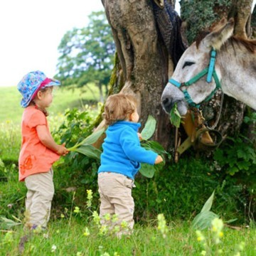 Randonner avec des petits bouts, c'est pas mal de matériel à porter 🎒, surtout si vous envisagez de bivouaquer ! 🏕  👉 On a testé la randonnée avec un âne 🐴 quand nos oursons 🐻 étaient plus petits. C'est une des aventures que l'on a préférée, et les enfants aussi !   Cela permet d'alléger votre chargement et permet aux enfants de découvrir cet adorable compagnon de rando.   ⚡ On vous partage notre expérience sur le blog où vous trouverez des conseils pratiques pour vous aussi connaître le bonheur de randonner avec vos marmots et un âne !  (Lien en bio 👆👆👆)  #randonner #randonnee #randonneravecunane #ane #hiking #randoenfamille #outdoorfamily #naturelovers #moutain #moontagne #balade #petitsbaroudeurs
